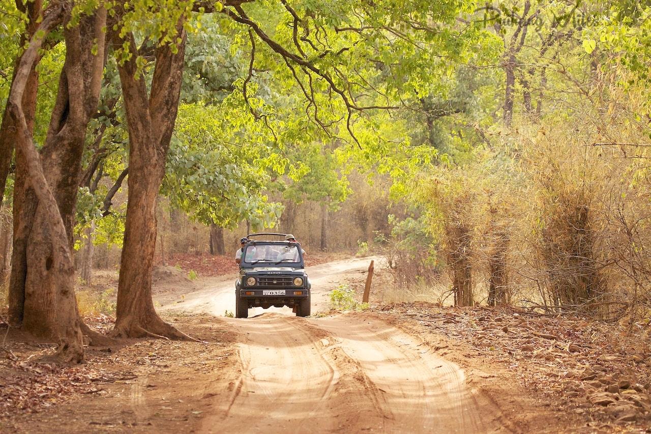 Read more about the article Jhurjhura Tigress of Bandhavgarh