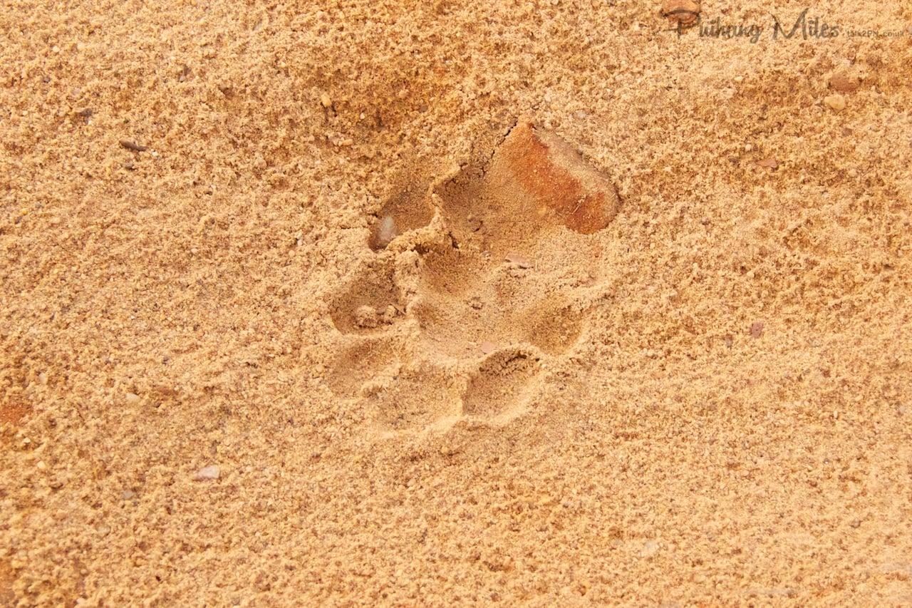 Read more about the article Bandhavgarh Tiger Safari