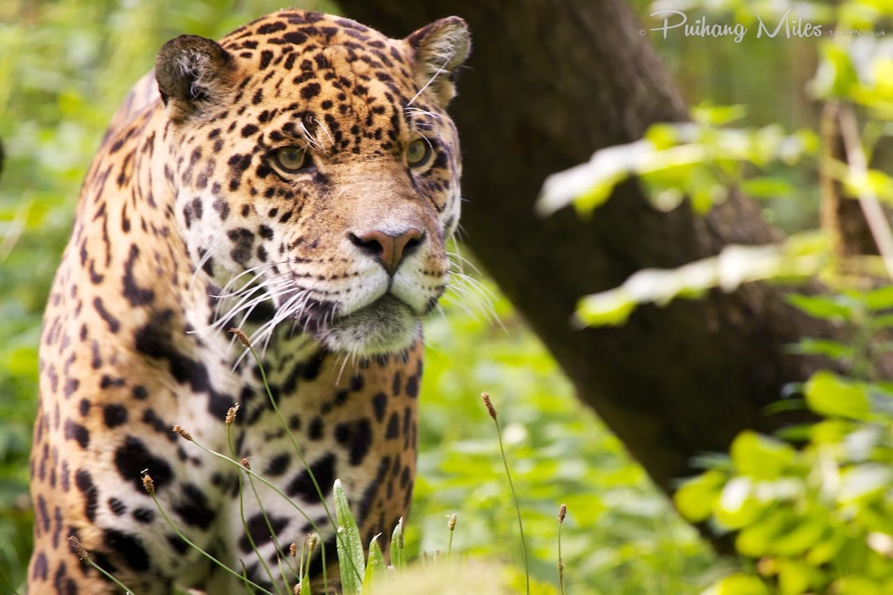 Read more about the article Dartmoor Zoo