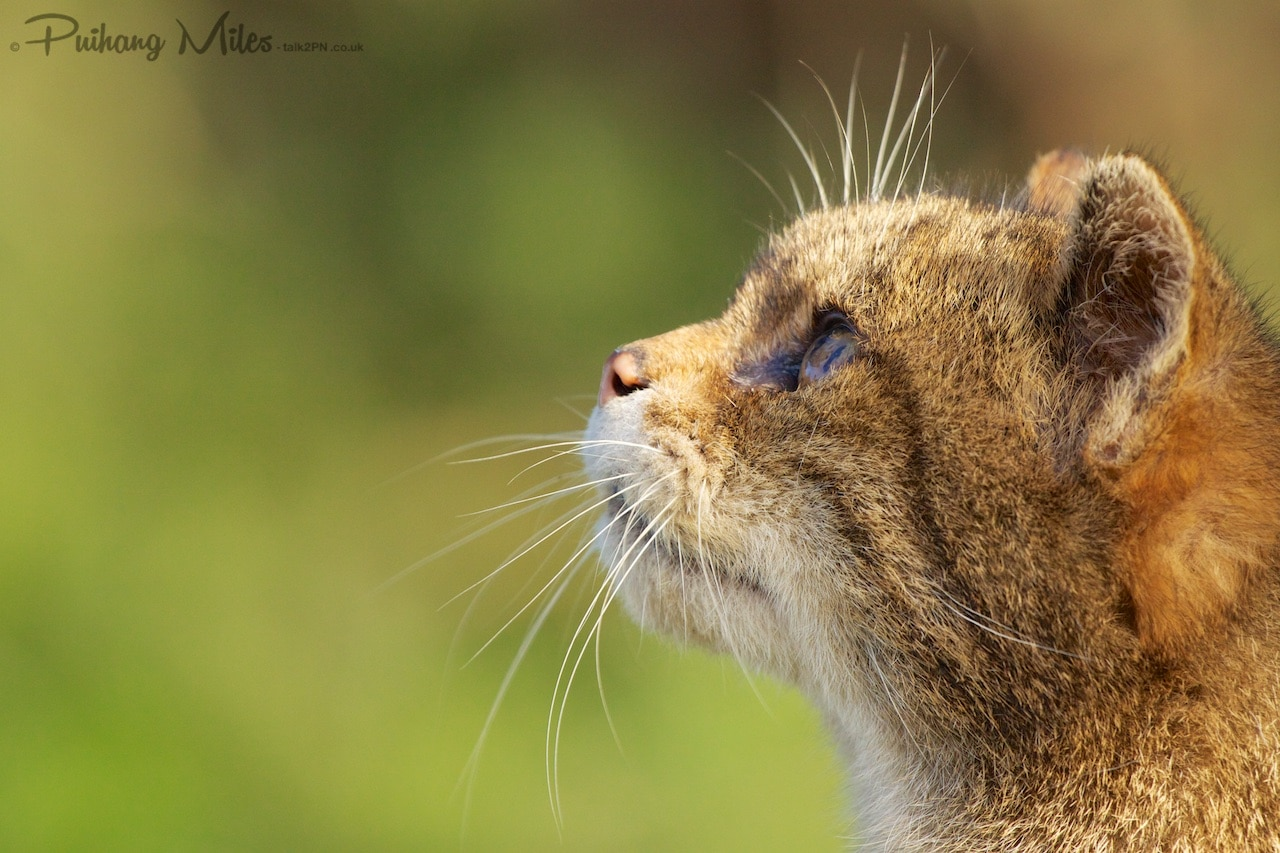 Read more about the article British Wildlife Centre