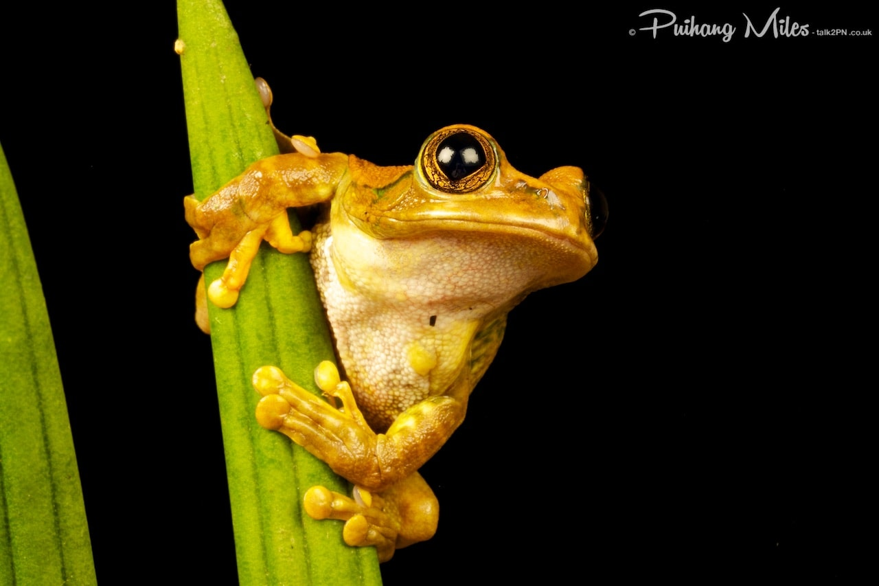 Read more about the article Frogs and other Tropical Species
