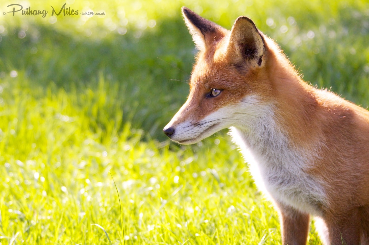 Read more about the article British Wildlife Centre in Autumn