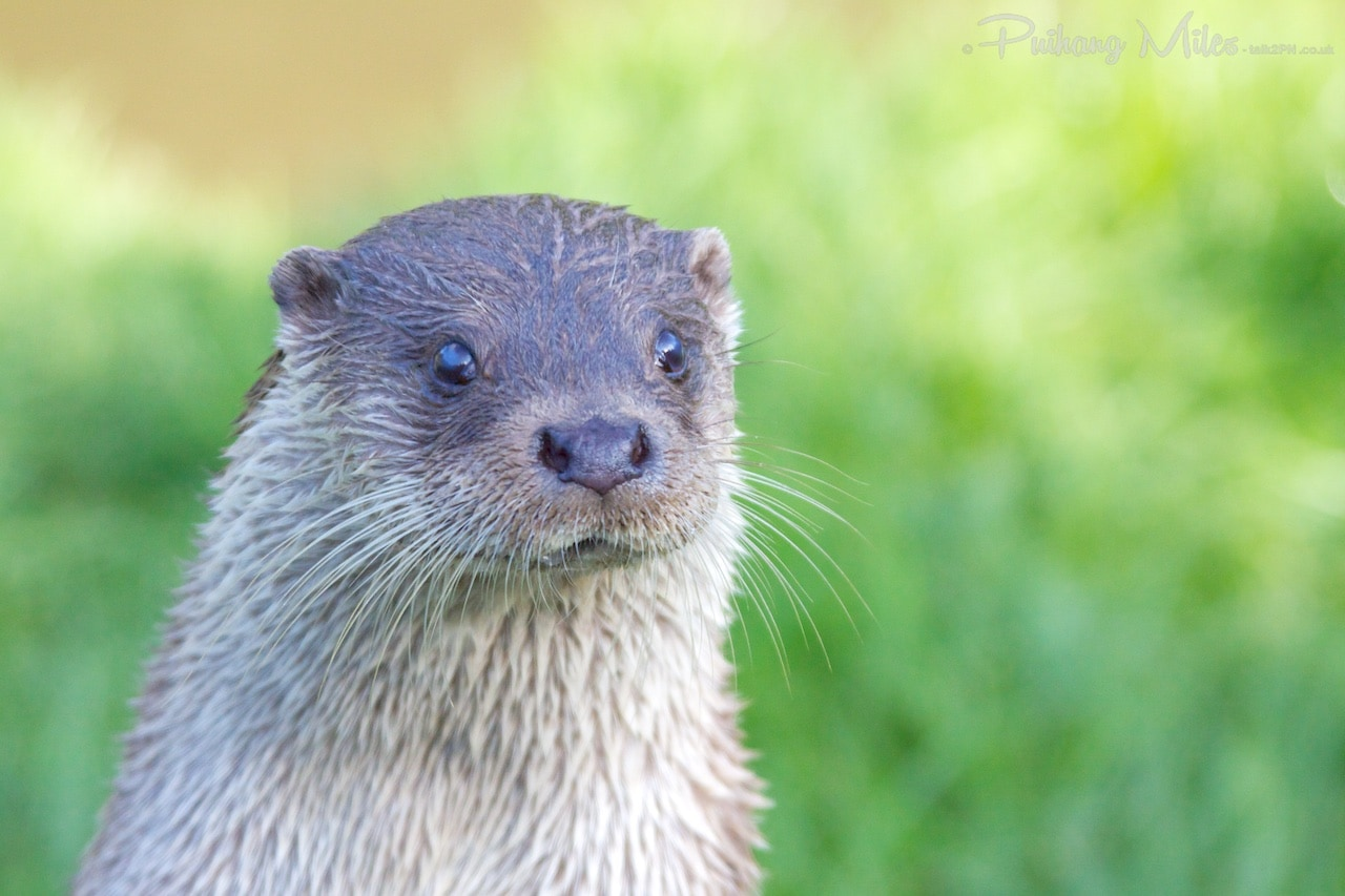 Read more about the article Tamar Otter Sanctuary