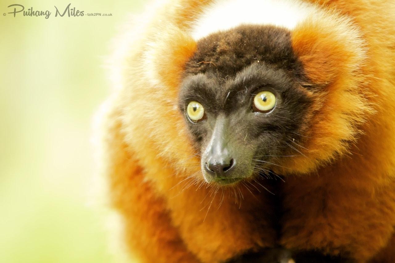Read more about the article Apenheul Primate Park