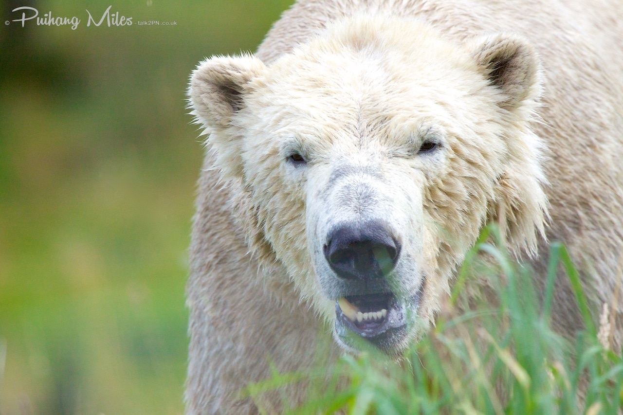 You are currently viewing Highland Wildlife Park, Kincraig