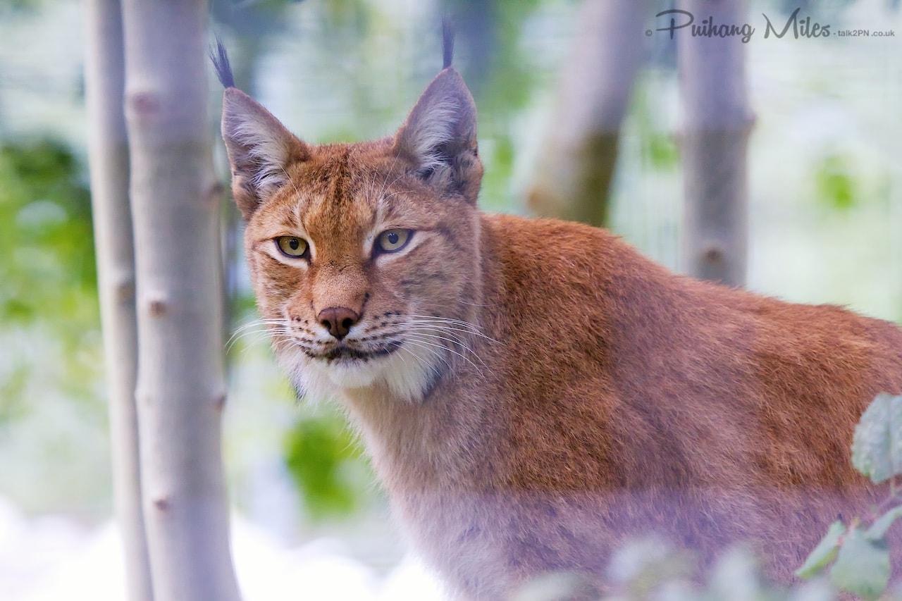 Read more about the article Le Parc des Felins