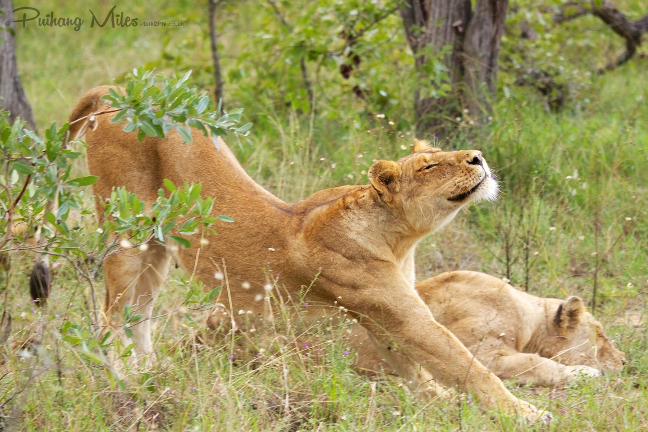 Read more about the article South African Safari